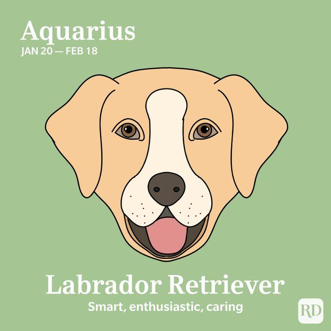 Aquarius: Labrador