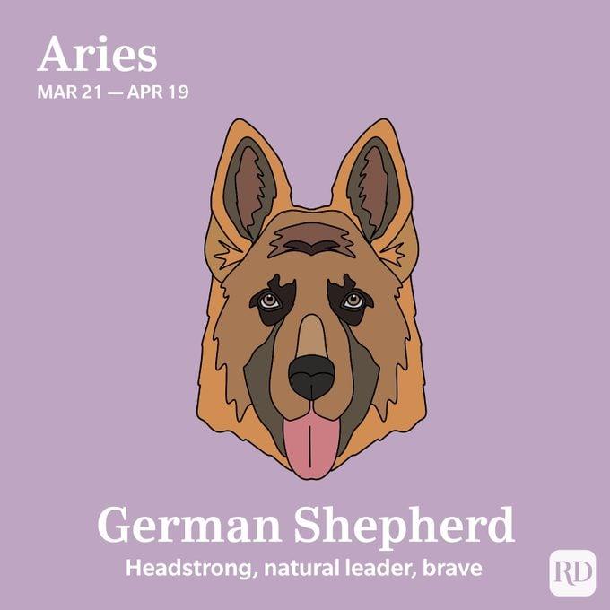 Aries: German Shepherd