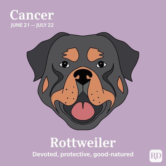 Cancer: Rottweiler
