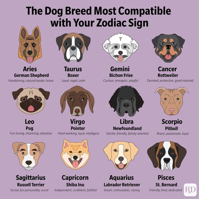 Which Dog Breed Matches your Zodiac Sign?