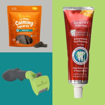 The 17 Dog Grooming Supplies and Tools Pros Recommend