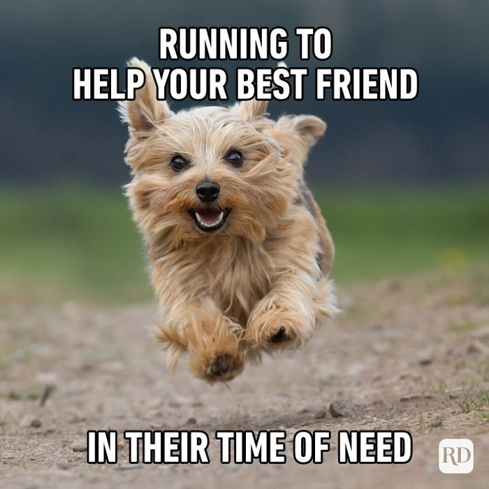 Meme text: Running to help your best friend in their time of need