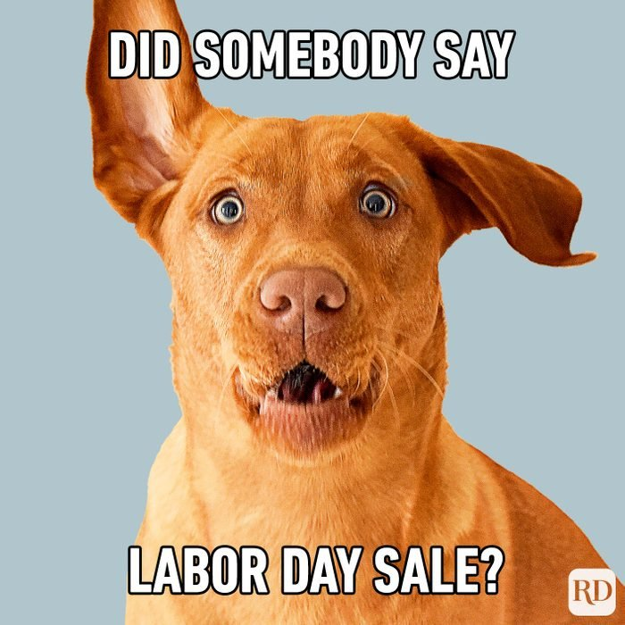Meme text: Did somebody say Labor Day sale?