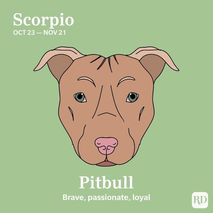 Scorpio: Pitbull