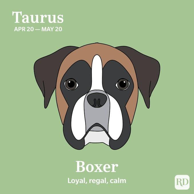 Taurus: Boxer