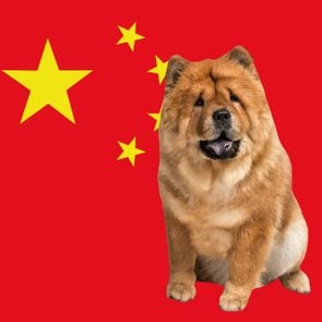 Chinese Dog Breeds Ft Square