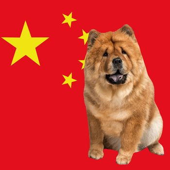 10 Authentic Chinese Dog Breeds and Their Fascinating History