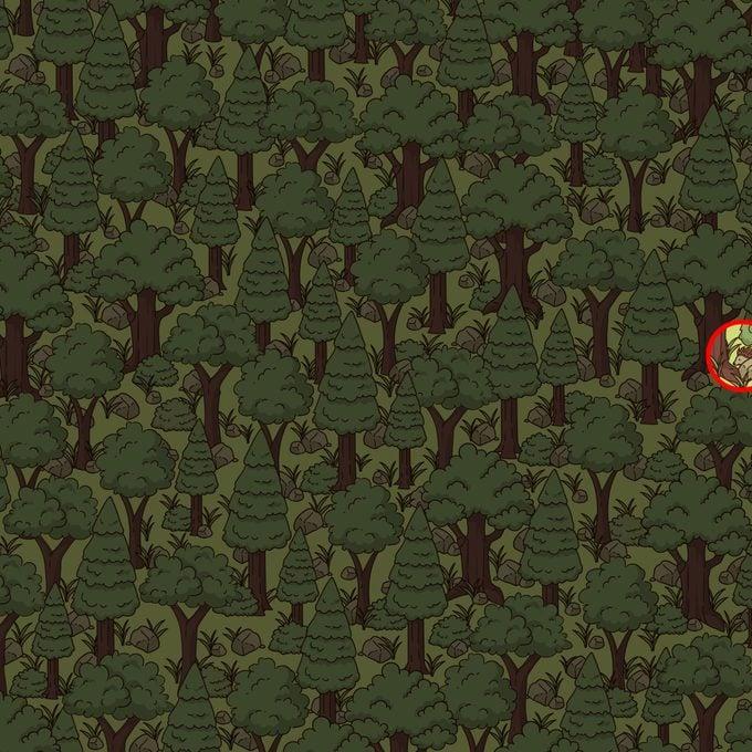 Find The Hidden Hedgehog Puzzle Solution