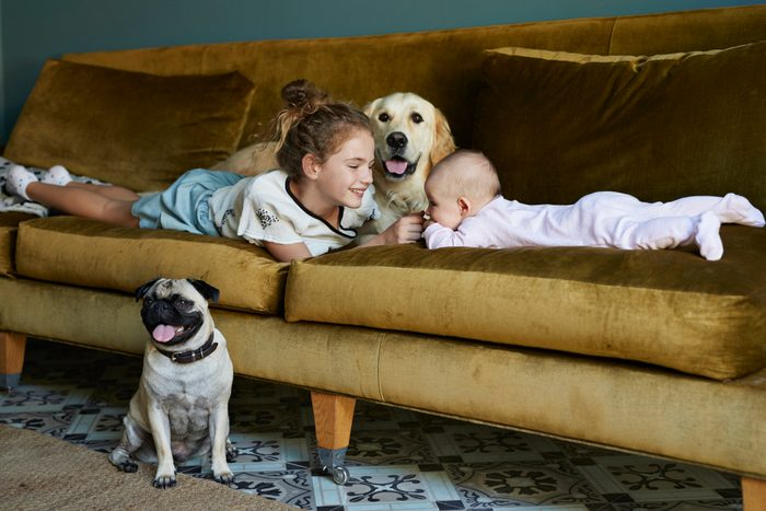 young girl and baby on couch at home with golden retriever and pug dogs