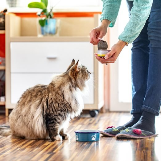 Adult Woman Feeding Her Siberian Cat With Can Food