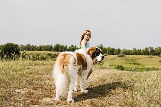 Little girl walks with big St. Bernard dog on prairie trail