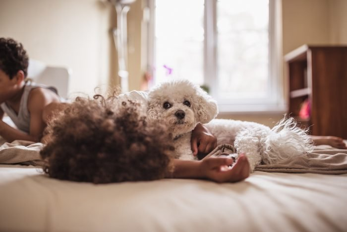 young children with their bichon frise dog at home