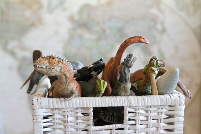 Animal Toys in Toy Box