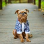 8 Adorable Dogs with Beards