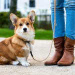 10 Lovable Dogs with Short Legs