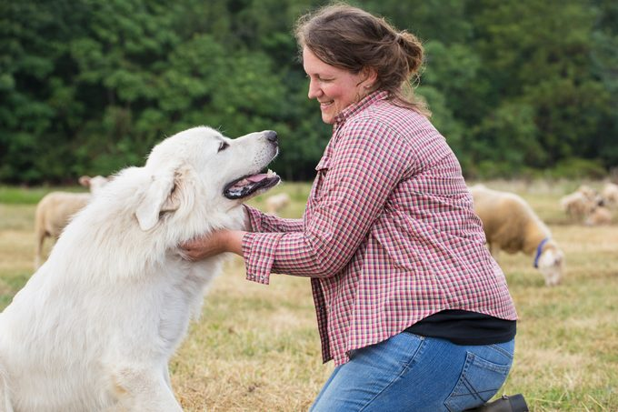 woman petting her great pyrenees dog on a farm
