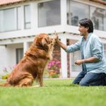 15 Best Dogs for First-Time Owners