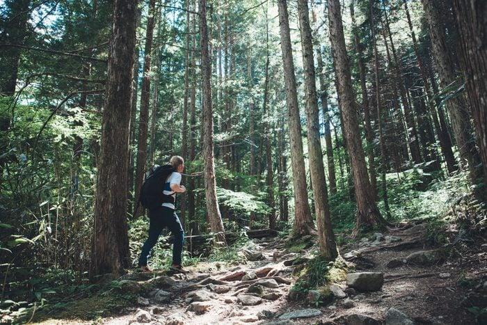 Hiker amongst Great Big Trees