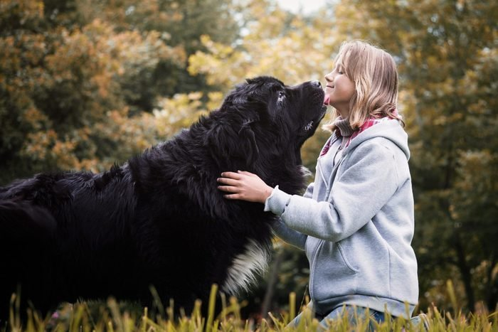 Young girl with huge dog breed Newfoundland