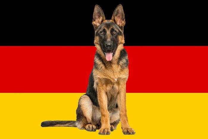 German Shepherd On German Flag