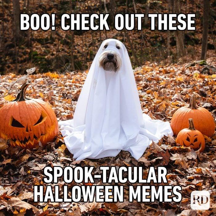 Halloween Memes Ft