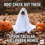 20 Halloween Memes That Will Have You Howling with Laughter