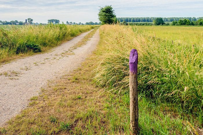 Sandy Road Between The Fields In Springtime with a single fence post painted purple at the top