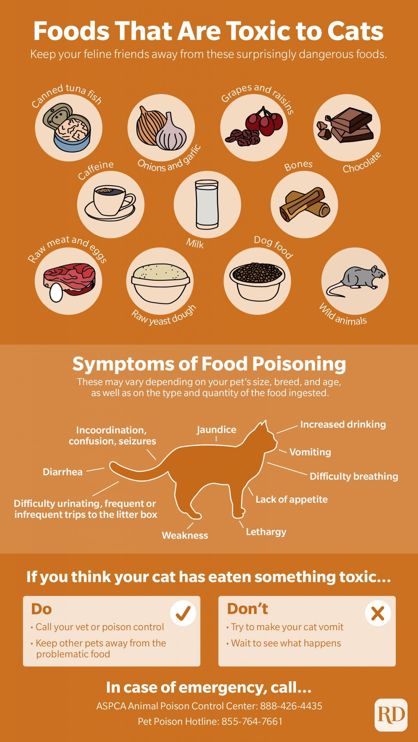 Foods that are toxic to cats infographic