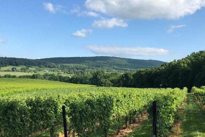Chrysalis Vineyards