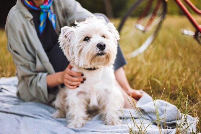 westie dog sitting on blanket outside with senior