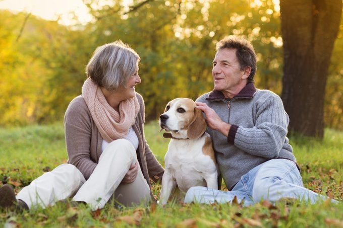 senior couple in a field with pet beagle dog