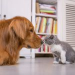 21 Dogs That Get Along with Cats