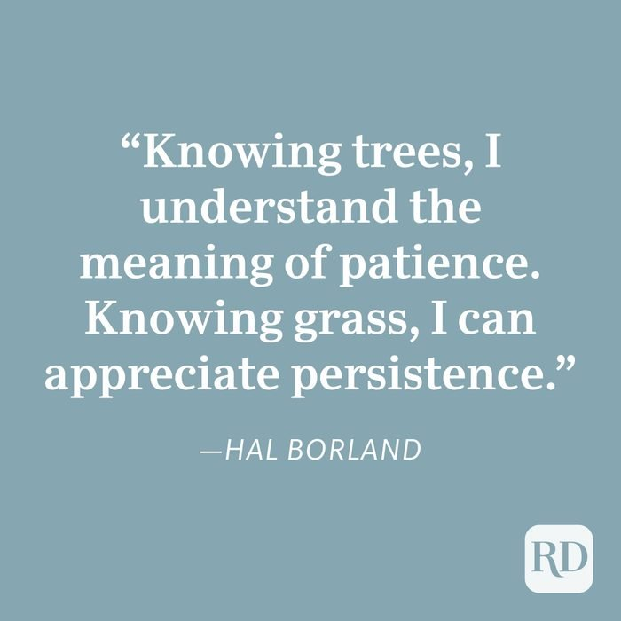 Hal Borland Patience Quote