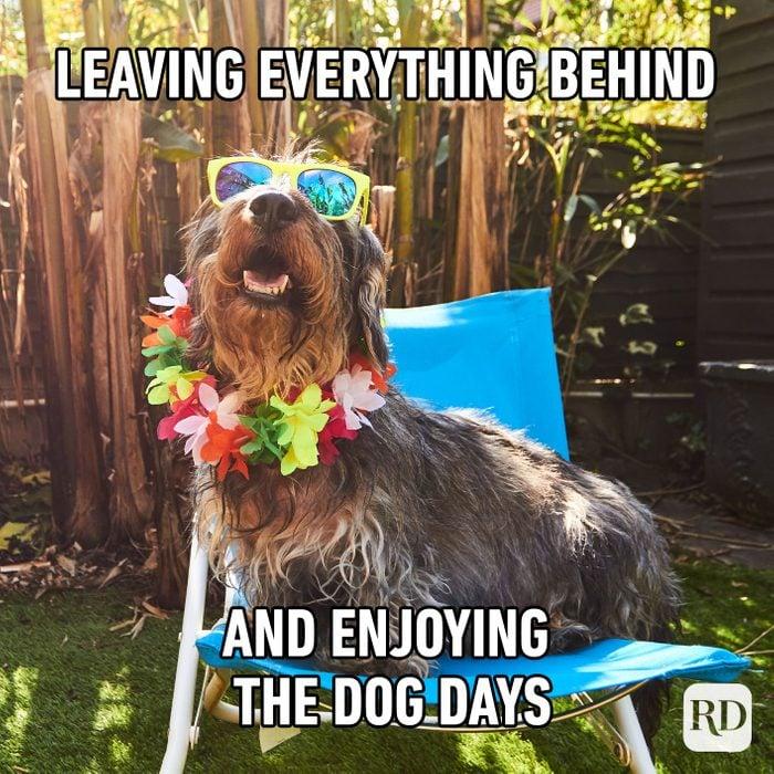 Leaving Everything Behind And Enjoying The Dog Days