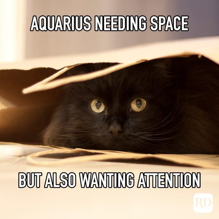 Aquarius Needing Space But Also Wanting Attention meme text on image of cat hiding in bag