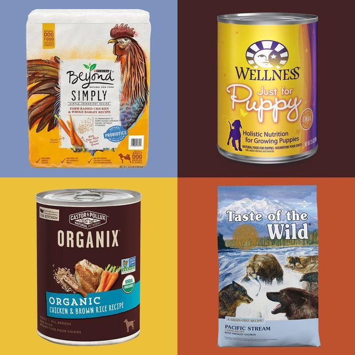 best all natural dog foods on color block background
