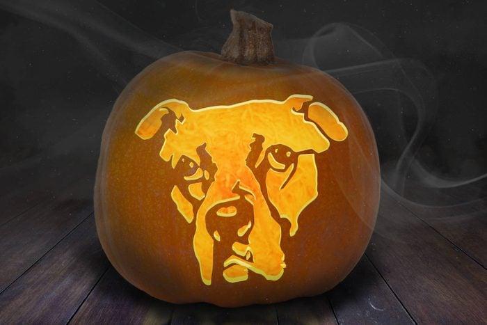Boxer Dog Carved Pumpkin