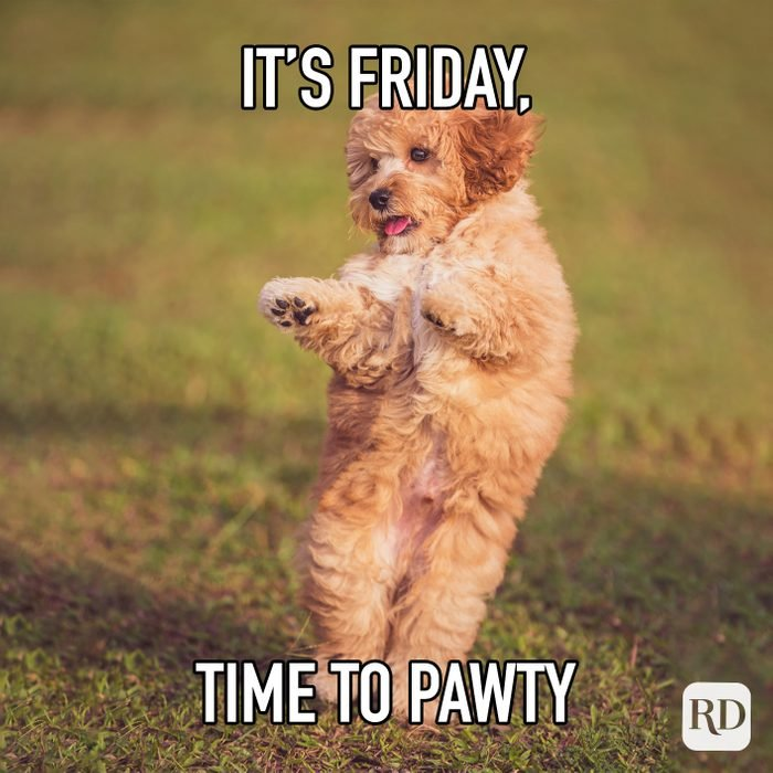 Its Friday Time To Pawty