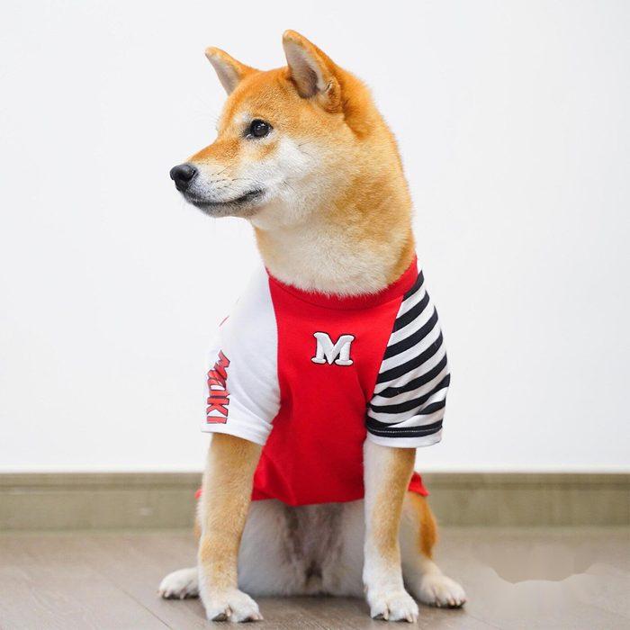 Racing Dog Halloween Costume