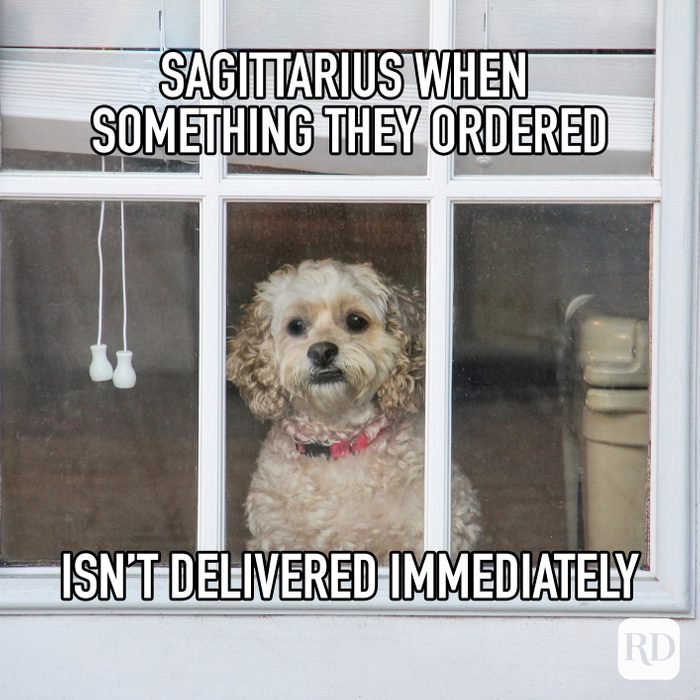 Sagittarius When Something They Ordered Isn't Delivered Immediately meme text on image of dog staring out window