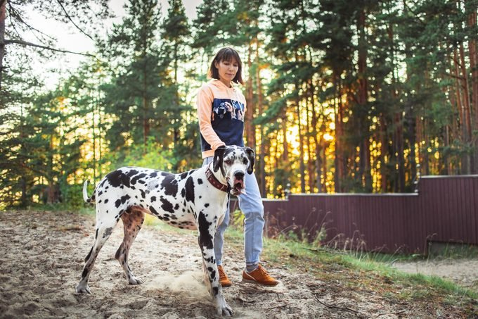 Woman and great Dane dog walking in forest