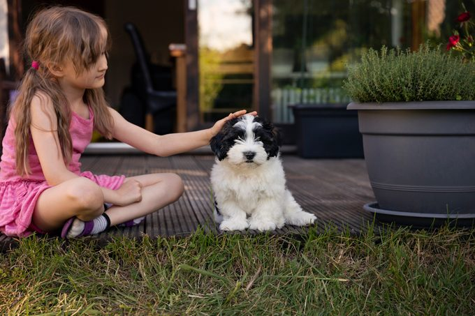 young girl petting her havanese dog in backyard