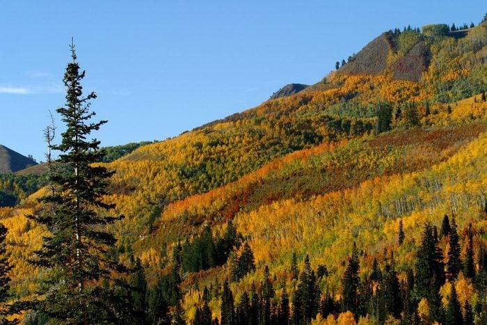 Autumn color in Big Cottonwod Canyon, Utah