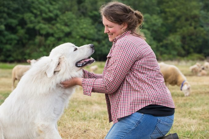 woman petting her great pyranees dog on a farm