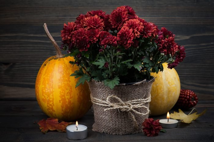 pot of red mums with burlap accent decor