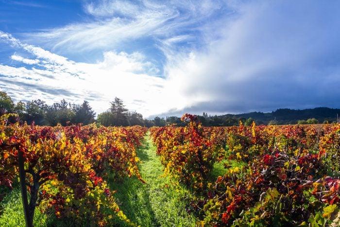 Autumn in the vineyards