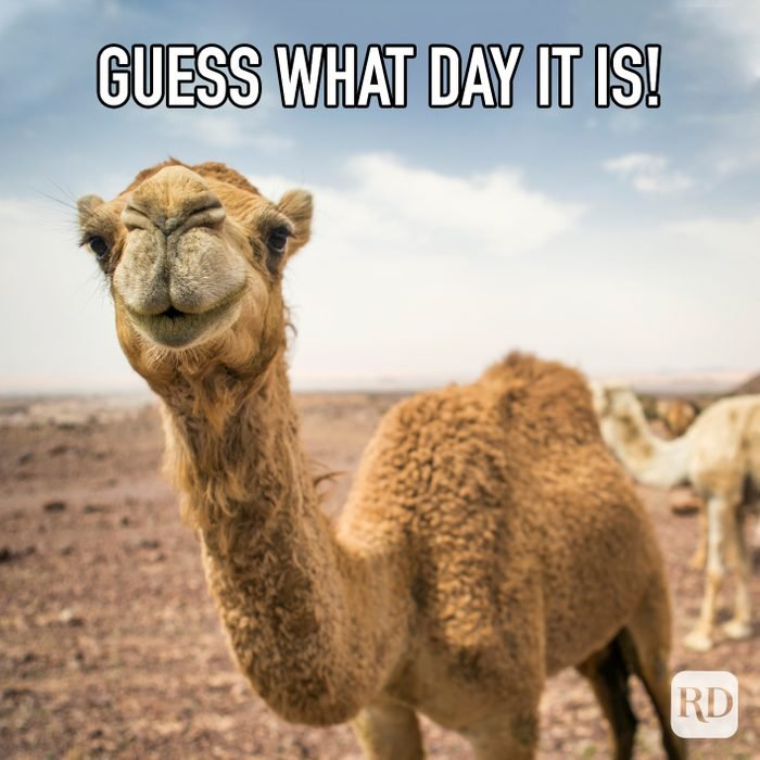 Guess What Day It Is meme text