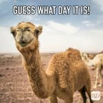 20 Hump Day Memes That Help Get You Through the Week