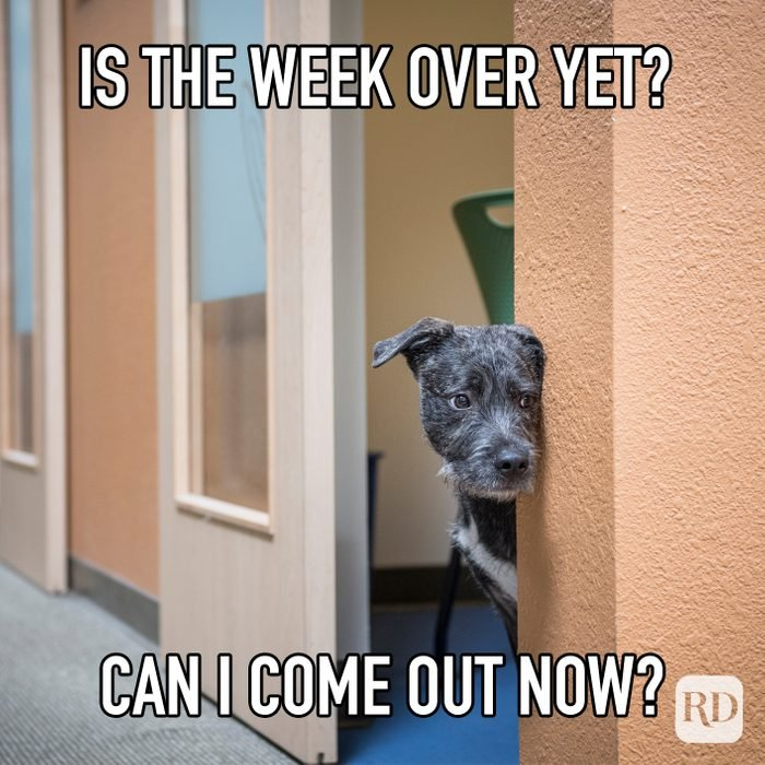 Is The Week Over Yet Can I Come Out Now meme text over image of dog peeking out of office