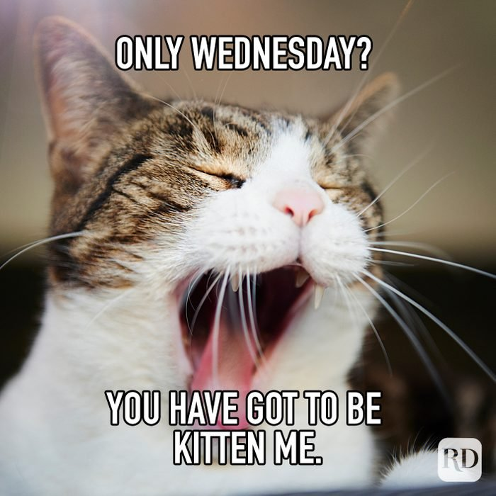 Only Wednesday You Have Got To Be Kitten Me meme text over image of kitten yawning